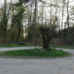 Horneburger Wald